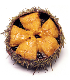 Sea Urchin Roe